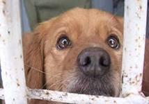 В Самаре работает государственная программа передержки животных